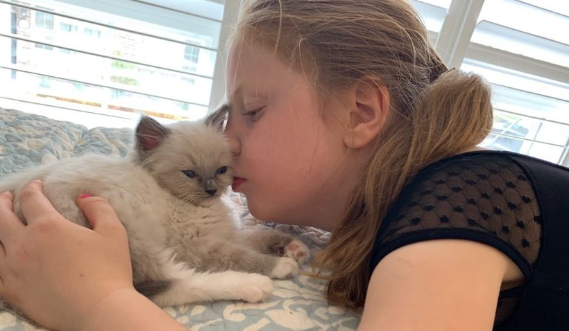 How To Introduce Ragdoll Kittens To A New Home